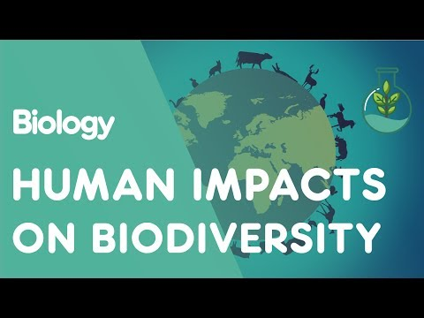 Human Impacts On Biodiversity | Ecology And Environment | Biology | FuseSchool