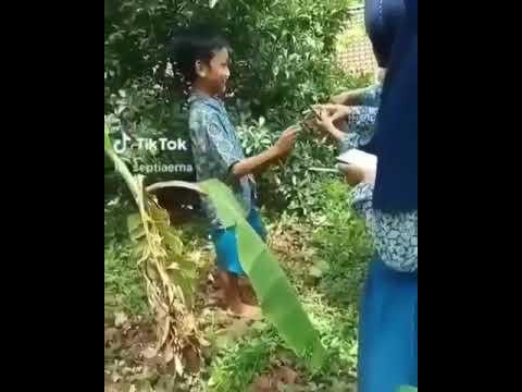 Viral anak sekolah lagi anu!!! Di kebun jadi pengen