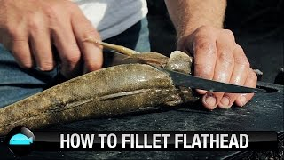 How To: Fillet Flathead | We Flick Fishing Videos