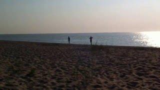 Дельфин у самого берега (Бугаз)