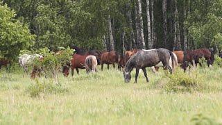 Русское поле, лес, природа.Спокойная музыка.[Nature Relaxation]