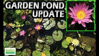 KOI POND UPDATE: A Look Inside My Garden Pond, See the KOI