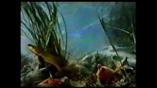 Значение водорослей