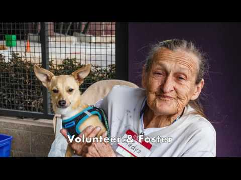 Denver Animal Protection: About Us