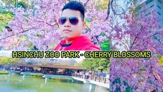 Hsinchu Park-Cherry Blossoms