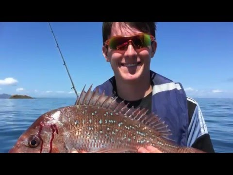 Waitemata Harbour Snapper - Dec 2015