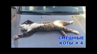 Приколы с кошками и котами #4. Подборка смешных и интересных видео с котиками и кошечками 2017