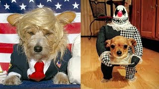the-best-halloween-costumes-for-dogs
