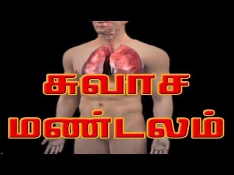 சுவாச மண்டலம் - respiratory - Human Body System and Function