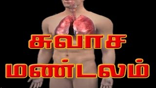 சுவாச மண்டலம் - respiratory - Human Body System and Function