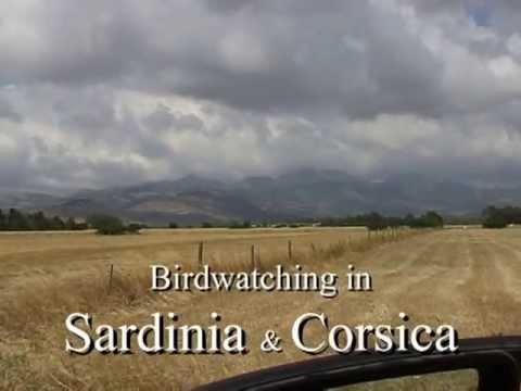 BIRDWATCHING IN SARDINIA & CORSICA