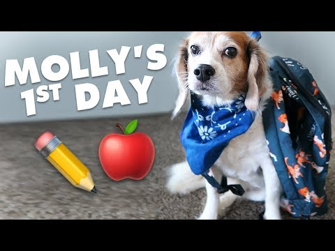 Teaching my 9-year-old dog her first trick!   Monday Vlog