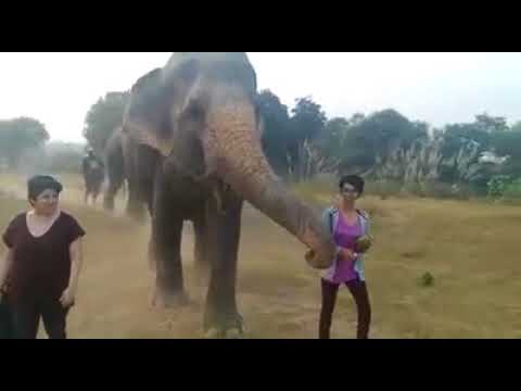 Walking With Elephants: Maya and Phoolkali At Wildlife SOS