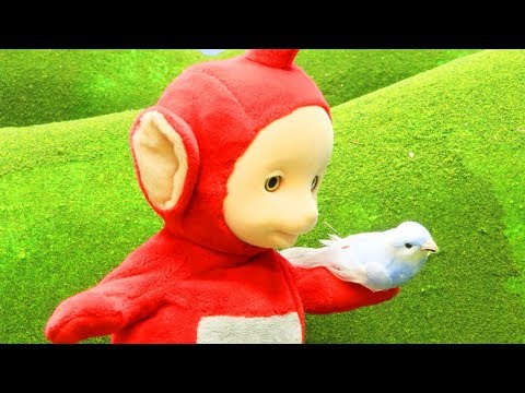 Teletubbies | Po's New Pet Bird | WATCH ONLINE | Teletubbies Stop Motion | Cartoons for Children