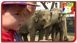 Ziua #6  ZOO din Budapesta   Unul dintre Cele mai mari zoo din Europa  Bogdan`s Show vlog calatorie