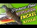 Perkutut Lokal Gacor Suara Engkel  Mp3 - Mp4 Download