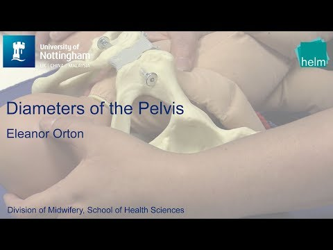 Diameters of the Pelvis