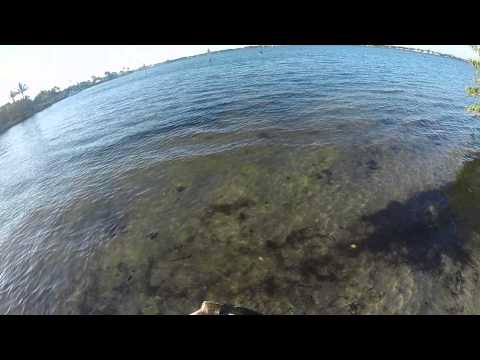 Snook fishing the manatee river.