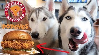 2 Huskies Review The NEW Popeyes Spicy Chicken Sandwich!