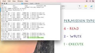How to Use the Terminal: 'chmod' Command Demystified and Put to Use