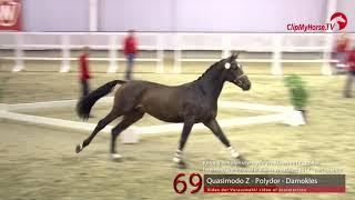 69 Junghengst v. Quasimodo Z - Polydor