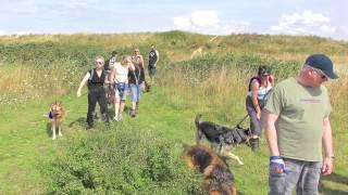 Titus: To Walk With Dogs, German Shepherd Dog. Hampshire Walks, Uk.