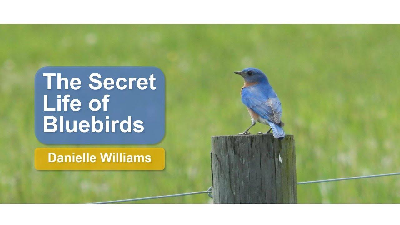 The Secret Life of Bluebirds