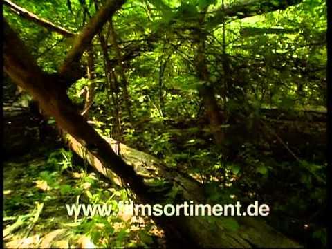 Tierfilm: DIE STUBENFLIEGE - EIN GANZ ALLTÄGLICHES MONSTER (DVD / Vorschau)