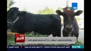 lستوديوالأخبار l..وزارة الزراعة تستعد لـ رمضان بـ12 ألف رأس من العجول الحية