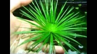 Aquarium Plants In Uk Fish Tank Background Help