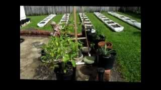 Vegetable Gardening South Florida Style