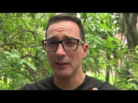 Las Noticias Falsas Involucraron a los Leopardos Dientes de Sable | C11 N7 #ViveDigitalTV