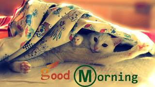 2018 Good Morning- Whatsapp Status Video, Message, Quotes, SMS, Greetings, eCard, Wishes, Image, Pic