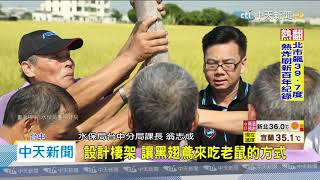 20200724中天新聞 滅鼠害!黑翅鳶護稻 一對每月可補500隻田鼠
