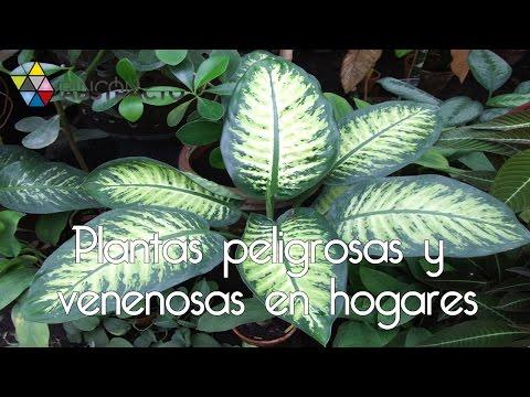 Plantas peligrosas y venenosas en hogares