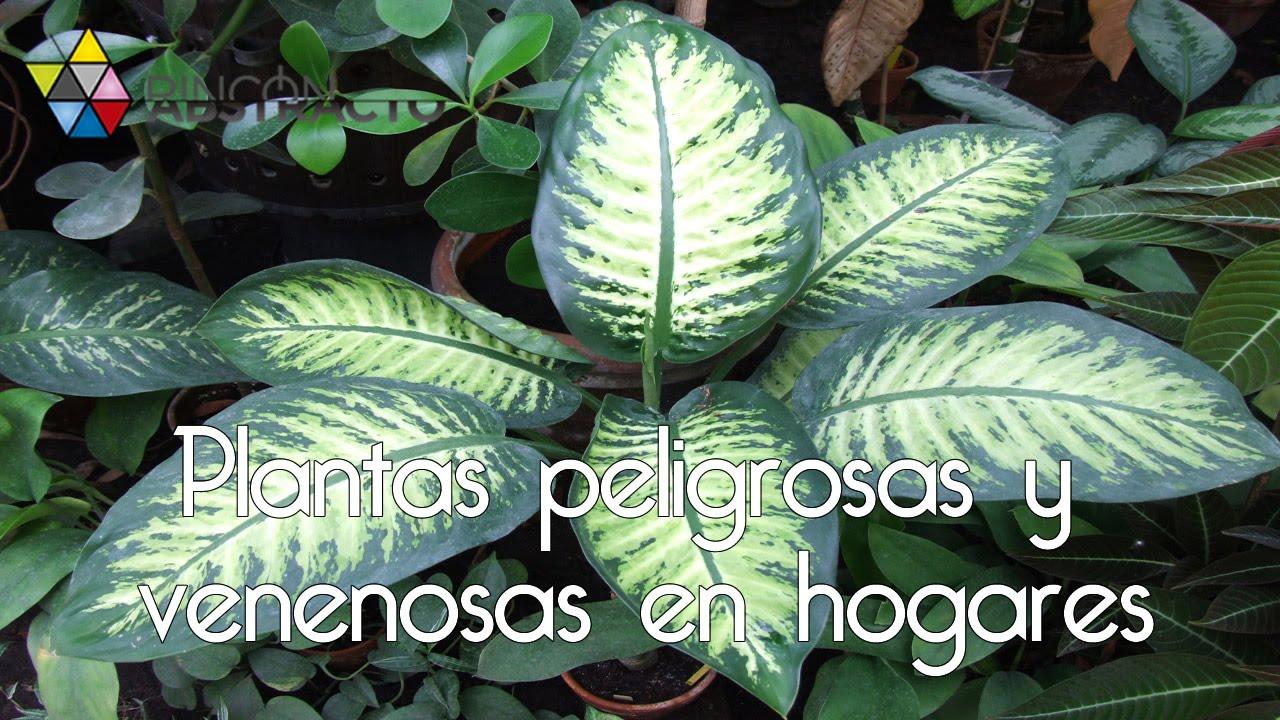 plantas peligrosas y venenosas en hogares youtube