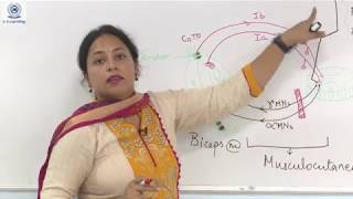 Upper and Lower Motor Neuron Lesions- Dr Aparna Gupta