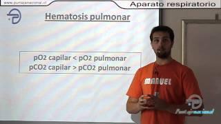 BIOLOGIA MC -- Procesos y funciones vita...