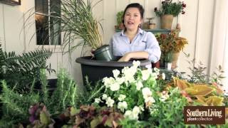 How to Plant a Fall Container Garden with Carmen Johnston
