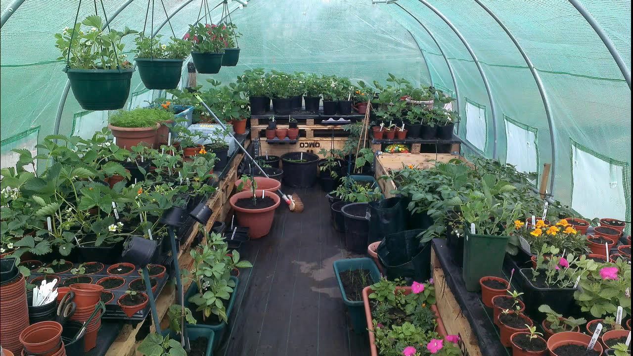 6ft Wide Polytunnel   Small 6ft Wide Domestic Polytunnels