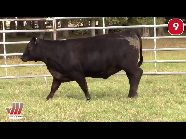 Waggoner Cattle Co. Lot 9