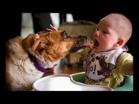 Дети и животные. Лучшие фото и видео