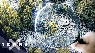 Unsere Wälder (1/3): Die Sprache der Bäume | Ganze Folge Terra X