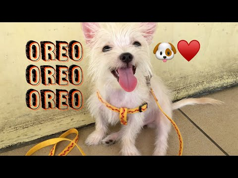 DINALA NAMIN SI OREO SA VET CLINIC #vlog | Maria Faye Vargas
