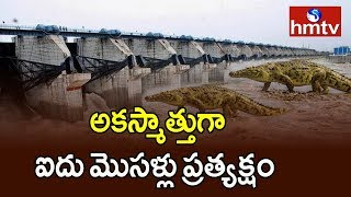 Crocodiles Found In Pulichintala Project | hmtv Telugu News