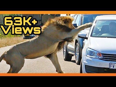 African Lion Safari Canada - Hamilton