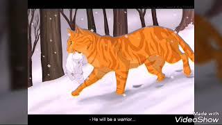 В память об Огнезвезде.../Коты-Воители/Cats Warriors