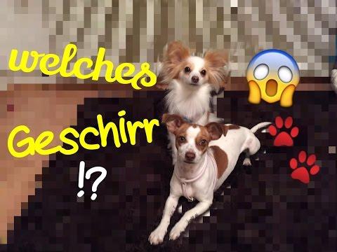 Hilfe!! Welches Geschirr passt zu meinem Hund? Ich helfe Euch!