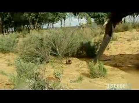Mythbusters Elephant vs Mouse