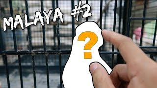 FINDING A NEW MASCOT FOR THIS CHANNEL (CARTIMAR PET MARKET)! | Vlog #136